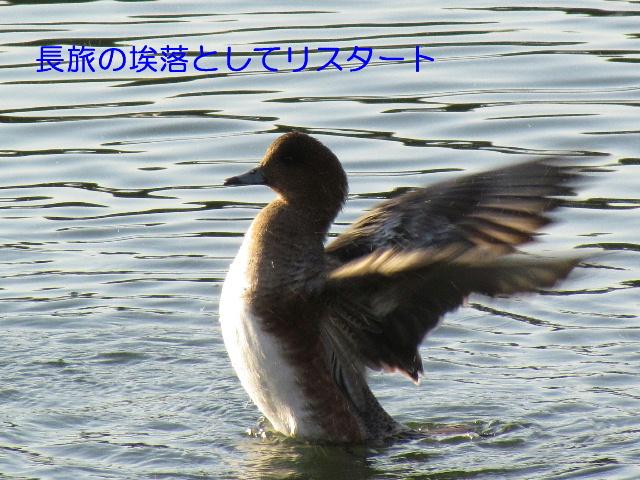 Img_7029