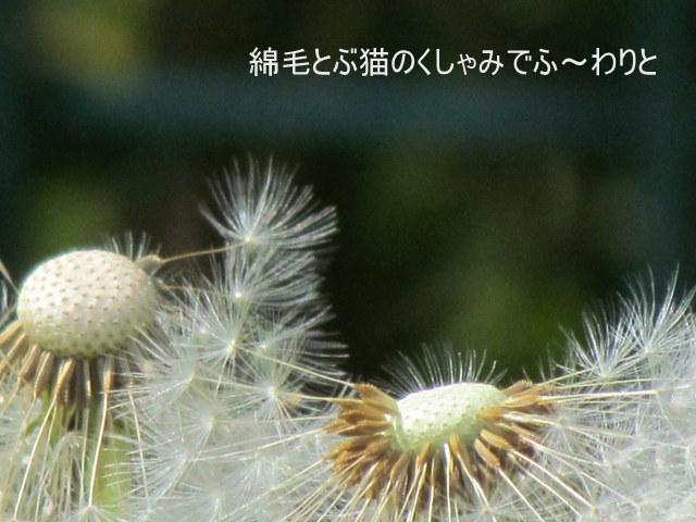 Img_9177001